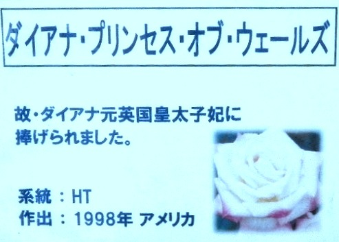 ss-DSCN2421.jpg